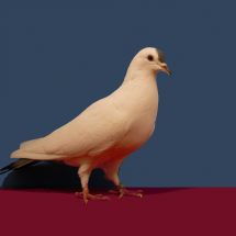 Res_Champion_Rare_Pigeon