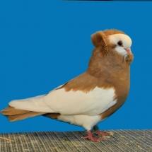 komorner-tumbler-magpie